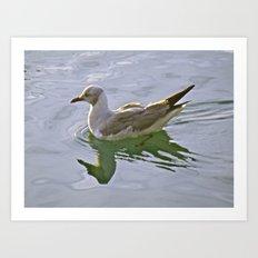 Seagulls Swim Art Print