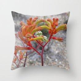 Orange Kangaroo Paw Flowers Throw Pillow