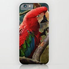 Roter Ara iPhone 6s Slim Case