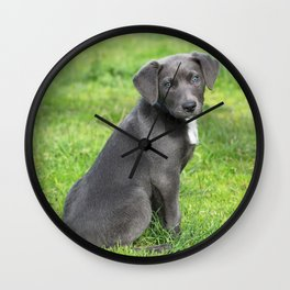 Adorable Grey Puppy Wall Clock