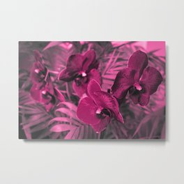 Orchid falinopsis . Metal Print