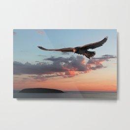 Evening Albatross Metal Print