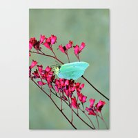 butterfly Canvas Prints featuring butterfly by  Agostino Lo Coco