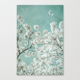 flowering season Canvas Print
