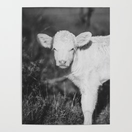 Cute Calf (Black and White) Poster