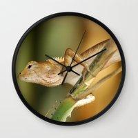 eddie vedder Wall Clocks featuring Eddie Lizard by Adam Latham Photography