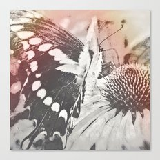 rose glow butterfly and coneflower Canvas Print