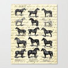 1895 Vintage Horse study Canvas Print