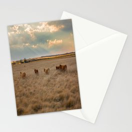 Cows Among the Grass - Cattle Wade Through a Field in Texas Stationery Cards