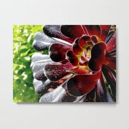 Giant Red Aeonium Metal Print