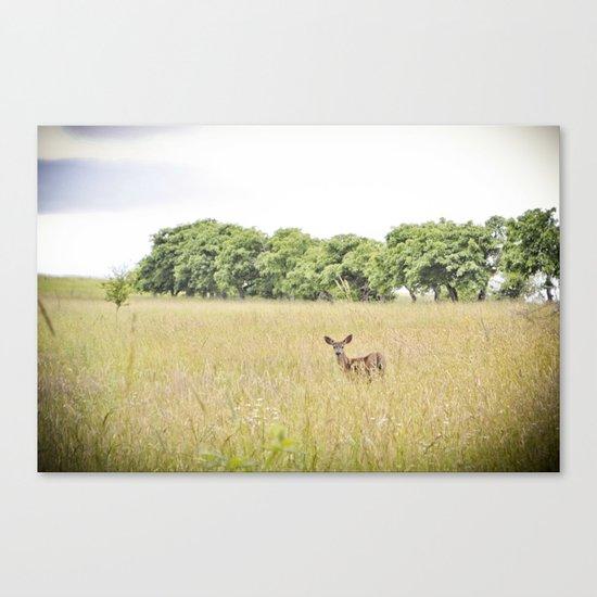 little dear Canvas Print