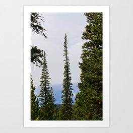 Pines Up High Art Print