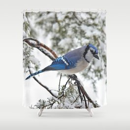 Beautiful Blue Jay Shower Curtain