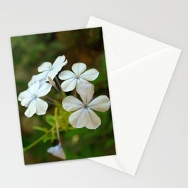 White little flower Stationery Cards