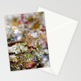 Unknown Species of Nudibranch Stationery Cards