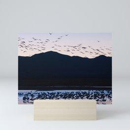 Sandhill Cranes At Whitewater Draw Mini Art Print