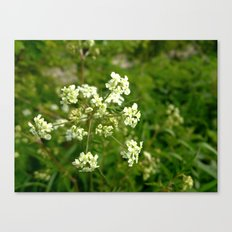 White Water Hemlock Canvas Print