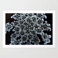 queen anne lace Art Print