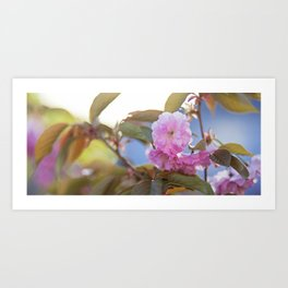 pink tree flowers Art Print