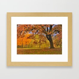 Fall at Larz Anderson Framed Art Print