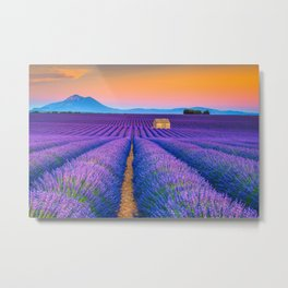 Blooming Lavender Field & Sunset Floral Landscape Photograph Metal Print