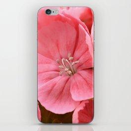 Sweet William iPhone Skin