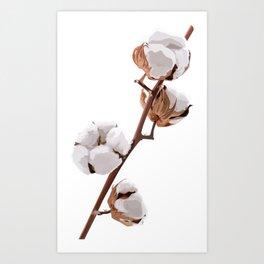 Scandinavian Cotton flower Art Print