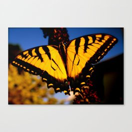 Photographs Canvas Print