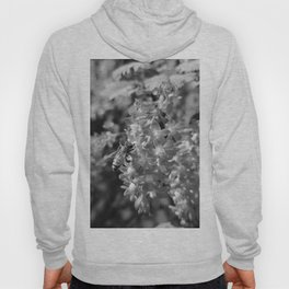 Bee and Blood Currant Ribes Sanguineum bw Hoody