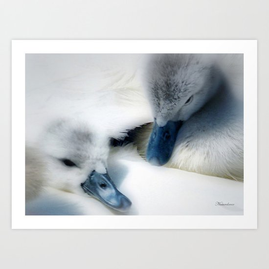 Wrapped In Swans Down Art Print