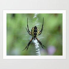 Garden Spider 2016 Art Print