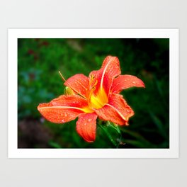 Beautiful flower Art Print