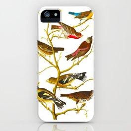 Lazuli Finch, Crimson-necked Bull-Finch, Gray-crowned Linnet, Cow-pen Bird, Evening Grosbeak, Brown iPhone Case