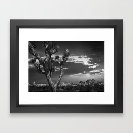 Joshua Tree at Sunset in Joshua Tree National Park in Black and White Framed Art Print