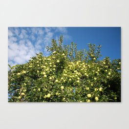 Green Apples & Blue Skies Canvas Print