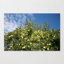 Green Apples & Blue Skies Canvas Print