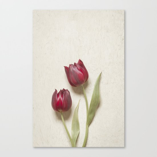 Two Red Tulips II Canvas Print