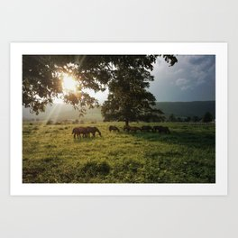 Bluemont Horses in Virginia Art Print