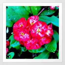Flowers_109 Art Print