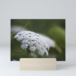 Queen Anne's Lace Mini Art Print