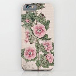 Flower 297 malva calycina Broad cupped Mallow13 iPhone Case