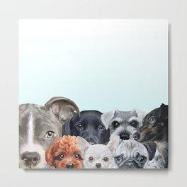 Dog all star 1 Metal Print