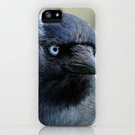 Jackdaw - Portrait iPhone Case