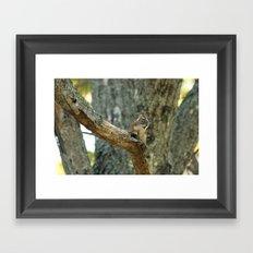 Brown Squirrel Framed Art Print