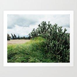 Cacti and Wheat Art Print