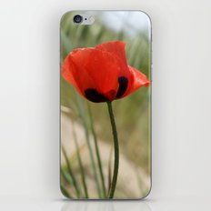 Wild Poppy iPhone & iPod Skin
