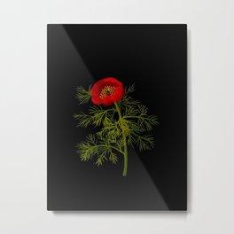 Paeonia Tenuifolia Mary Delany Vintage British Floral Flower Paper Collage Black Background Metal Print