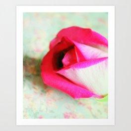 A Rose for Virginia Art Print