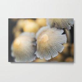 Shaggy Ink Cap Mushrooms 6 Metal Print