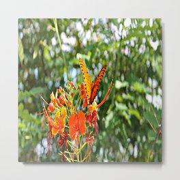 Orange Wings Metal Print